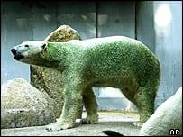 Groene ijsbeer